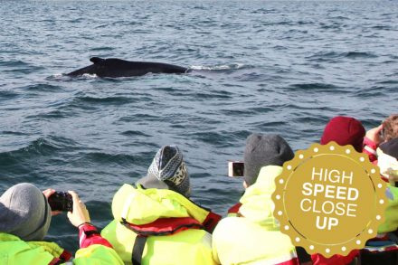 High-speed whale watching adventure in Akureyri on a rib-boat