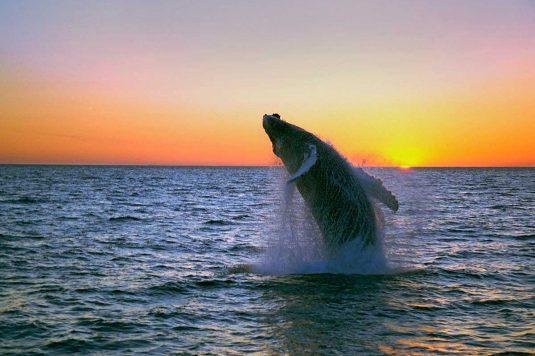 Reykjavik whale watching Ambassador